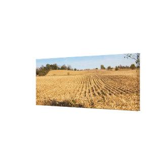 Iowa Cornfield Panorama Photo - 1 Stretched Canvas