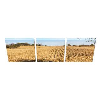 Iowa Cornfield Panorama Photo - 3 Stretched Canvas