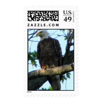 Iowa Eagle Postage Stamps