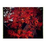 Iowa Fall Postcard