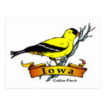 Iowa Goldfinch Postcard