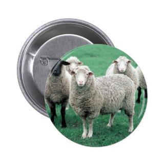 Iowa Sheep 2 Inch Round Button