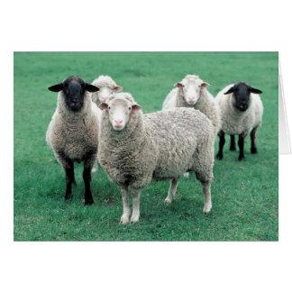Iowa Sheep Greeting Card