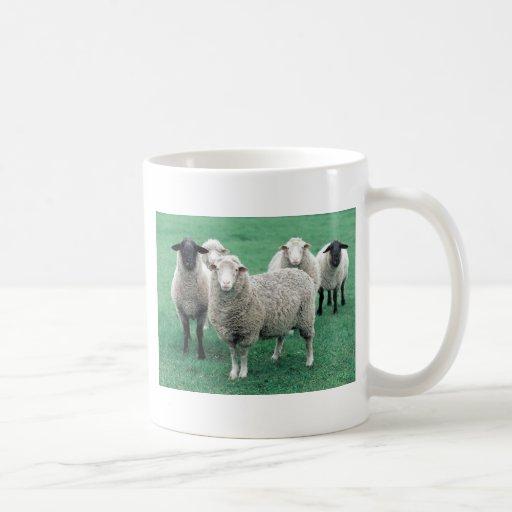 Iowa Sheep Coffee Mugs