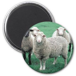 Iowa Sheep 2 Inch Round Magnet