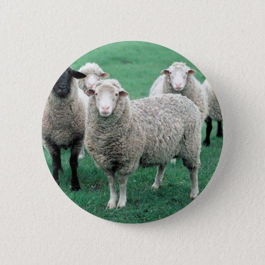 Iowa Sheep Pinback Button