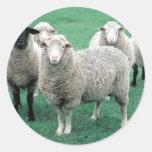 Iowa Sheep Round Stickers