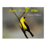 Iowa State Bird - American Goldfinch Postcard