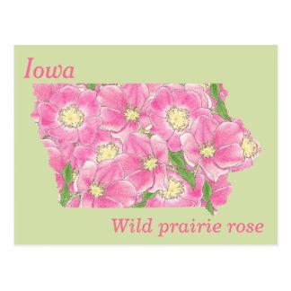Iowa State Flower Collage Map Postcard