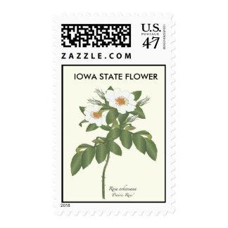 Iowa State Flower Postage