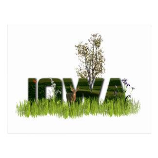 Iowa Wildlife Postcard