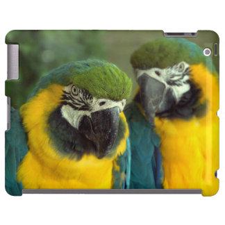 iPad 2/3/4 de los Macaws del azul y del oro Funda Para iPad