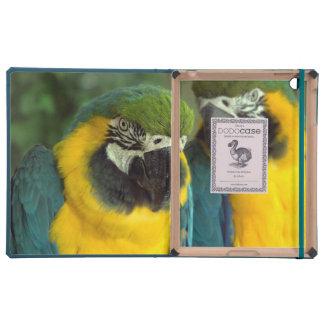 iPad 2/3/4 DODOCase de los Macaws del azul y del o