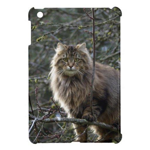 iPad animal de pelo largo del gato de Coon de Main iPad Mini Cárcasas