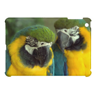 iPad de los Macaws del azul y del oro mini
