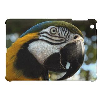 iPad del Macaw del azul y del oro mini