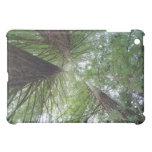 iPad en los árboles de la secoya