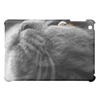 iPad gris del gato persa