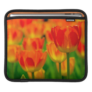 iPad sleeve - Tulip - 01
