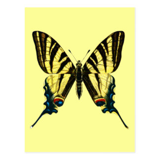 Iphiclides podalirius Postcard