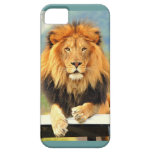 iPhone5 Case Male Lion King of the Jungle iPhone 5 Case
