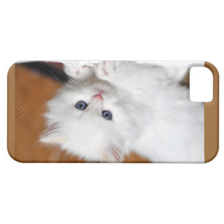 iPhone5 Case Persian Kitten Flame / Cream Point