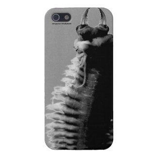 iPhone5 Nereis glossy cover