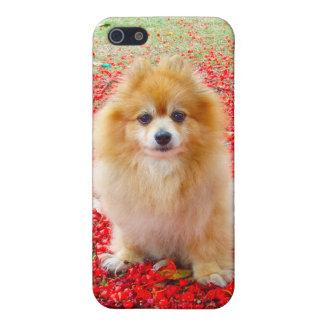 iPhone 4 4S el Pomeranian con las flores rojas iPhone 5 Coberturas