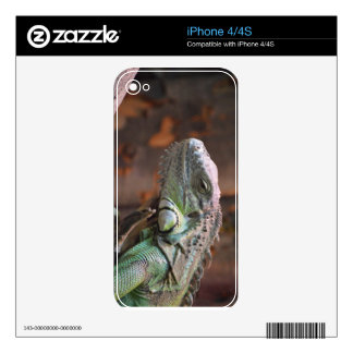 IPhone 4/4S Skin with colourful Iguana lizard iPhone 4 Decal