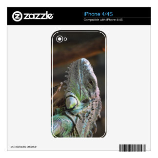IPhone 4/4S Skin with head of Iguana lizard iPhone 4S Decal