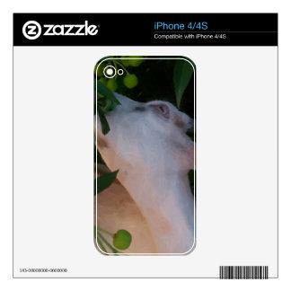 Iphone 4/4S vinyl protection skin iPhone 4S Decals