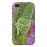 iPhone 4 Case - Fanciful Moth