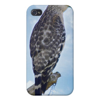 iPhone 4 Case - Osprey