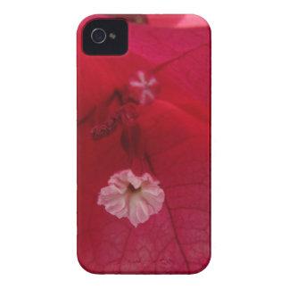 iPhone 4 Case - Reddish-Pink Flower