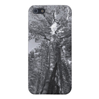 iphone 4  case Yosemite Grizly Giant Tree Mariposa Case For iPhone 5