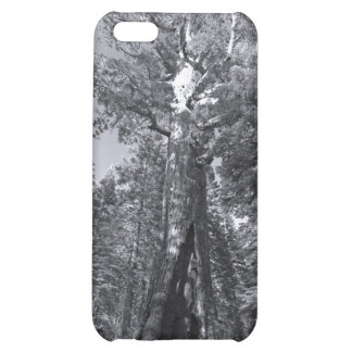 iphone 4  case Yosemite Grizly Giant Tree Mariposa iPhone 5C Cases