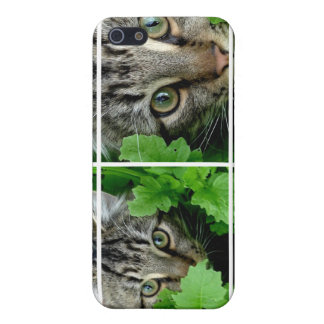 iPhone 4 Cats through Window Case Case For iPhone 5/5S