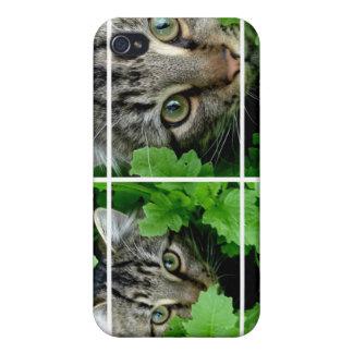 iPhone 4 Cats through Window Case iPhone 4/4S Cases