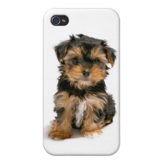 iPhone 4 Love Yorkshire Terrier Puppy Dog Case iPhone 4/4S Case