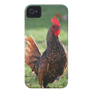 iphone 4, Rooster Case-Mate Barely There Case