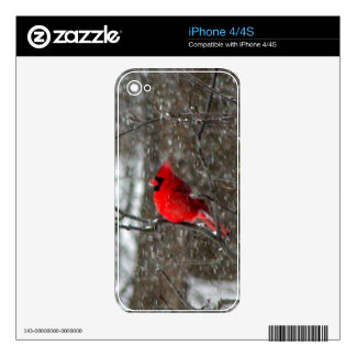 iPhone 4 skin with photo of male cardinal