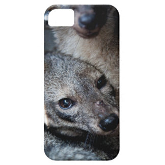 iPhone 5/5S Case Foxes
