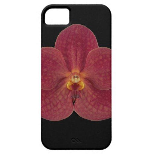 iPhone 5/5s de la caja del teléfono celular de la iPhone 5 Coberturas
