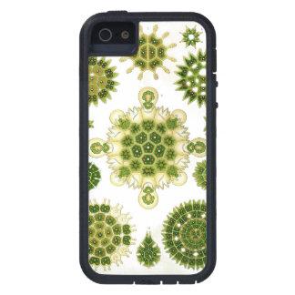 IPHONE 5 algae case iPhone 5 Cover