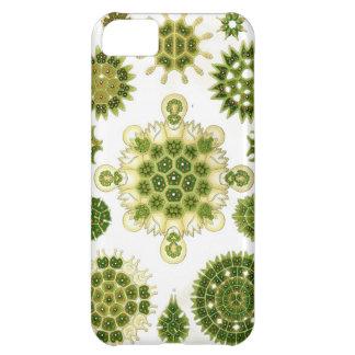IPHONE 5 algae case iPhone 5C Cover