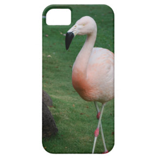 iphone 5 barely there qpc template iP - Customized iPhone 5 Case