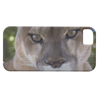 iphone 5 barly there QPC template iPh - Customized iPhone 5 Case