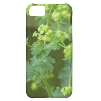 iphone 5 barly there QPC template iPh - Customized iPhone 5C Case