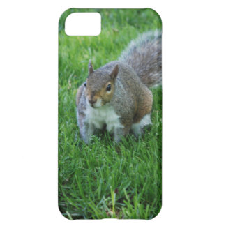 iphone 5 barly there QPC template iPh - Customized Cover For iPhone 5C