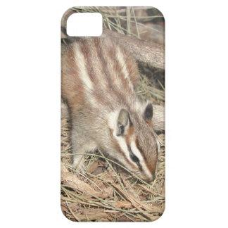 iPhone 5 Case - Chipmunk